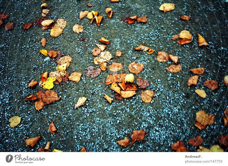 fallen leaves Blatt Herbst Wege & Pfade Sand gehen laufen Spaziergang fallen Fußweg Verkehrswege Herbstlaub Kies herbstlich November Joggen Schwindelgefühl