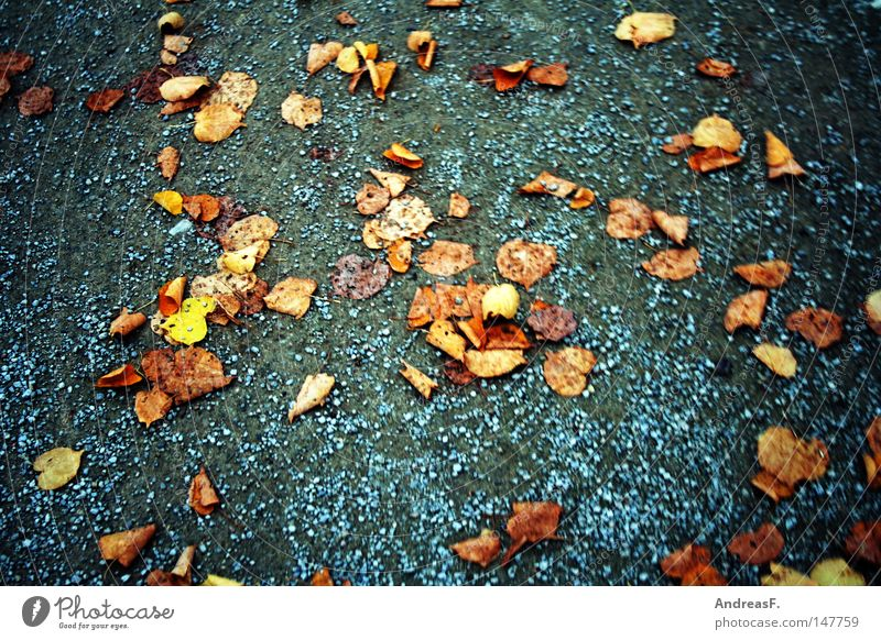 fallen leaves Blatt Herbst Wege & Pfade Sand gehen laufen Spaziergang Fußweg Verkehrswege Herbstlaub Kies herbstlich November Joggen Schwindelgefühl