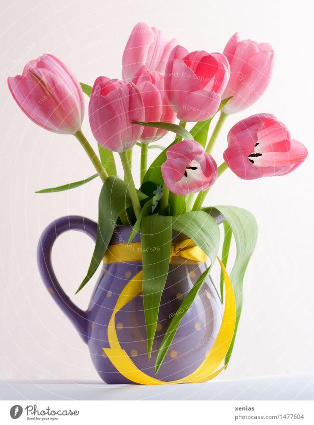 Rosa Tulpen in violetter Vase mit gelbem Band Blumenstrauß Valentinstag Muttertag Ostern Geburtstag Frühling grün rosa Lebensfreude Liliengewächse tulip