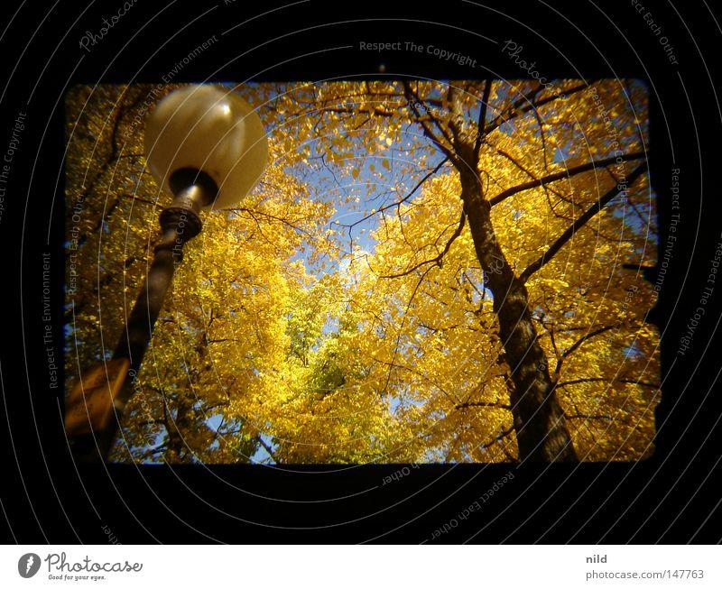 Analog–Digital (Aufm weg zur Wiesn) blau gelb Herbst gold Fröhlichkeit analog Laterne Fußweg Schönes Wetter Sucher himmelblau Bayern Theresienwiese