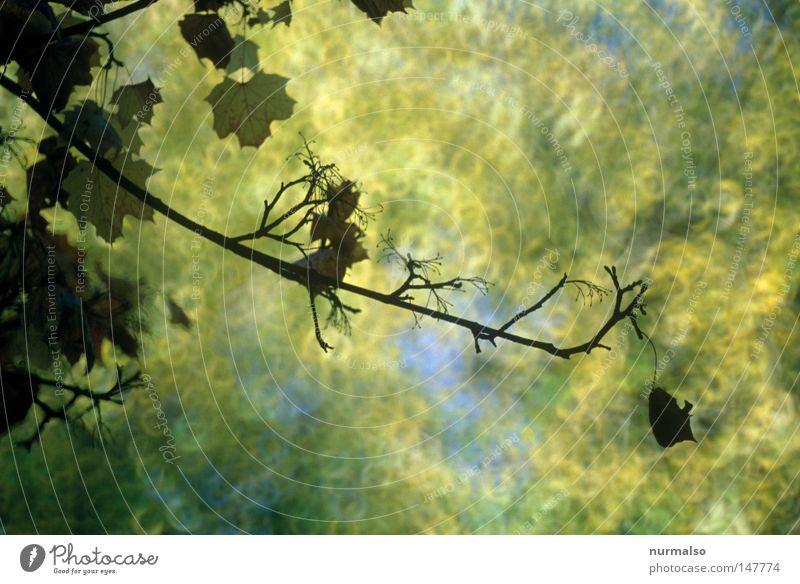 Mitten im Herbst II blau schön Baum Farbe Blatt gelb Tod Wärme oben Holz Farbstoff Beleuchtung braun Stimmung gold