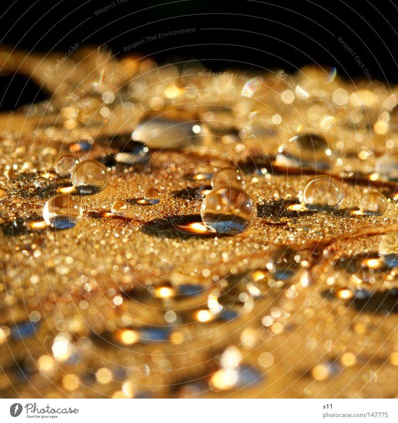 Perlenmeer schön Lampe Seil Natur Pflanze Wasser Wassertropfen Herbst Wetter Regen Blatt Kugel frisch hell kalt nass braun gold Kraft Glasperle Murmel