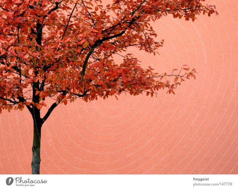 Herbst isochrom Haus Baum Blatt hell orange rosa rot Partnerschaft Monochrom Wand anni k. mehrfarbig