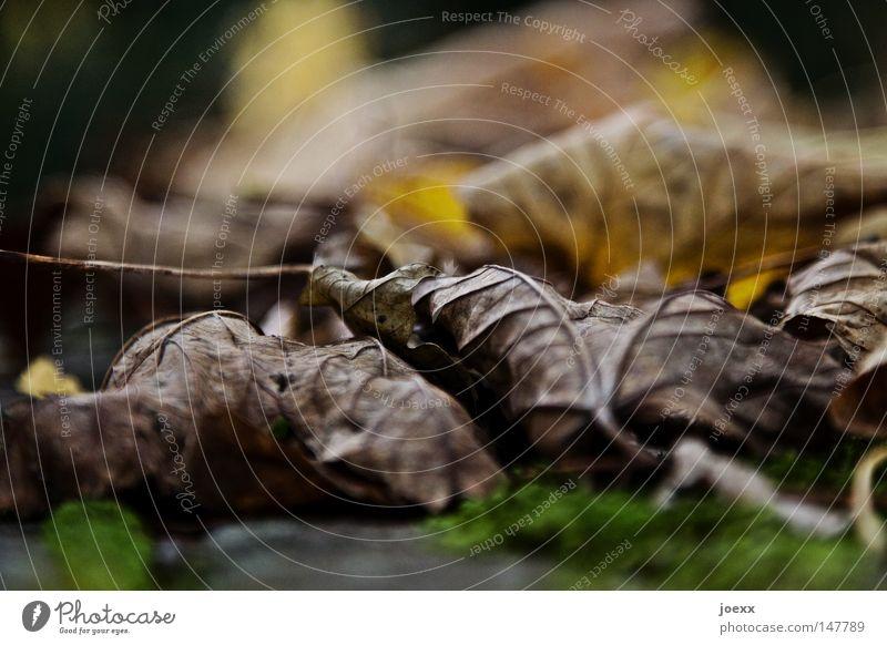 Altkleider Müll Gemälde Blatt Blätterdach blätternd Boden braun bräunlich Dekoration & Verzierung Erde Farbenspiel Froschperspektive grün Herbst Herbstbeginn