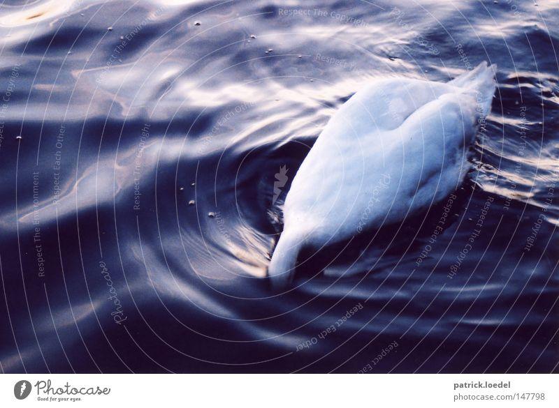 Köpfchen unter Wasser Farbfoto Gedeckte Farben Außenaufnahme Menschenleer Tag Dämmerung Kontrast Reflexion & Spiegelung Vogelperspektive Tierporträt Wellen