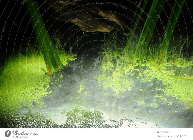 KAPUT - und am Ende war Licht Aquarium Algen Wasserpflanze Grünpflanze Schatten Wasseroberfläche Froschperspektive Sog Hintergrundbild grün Lichtbrechung