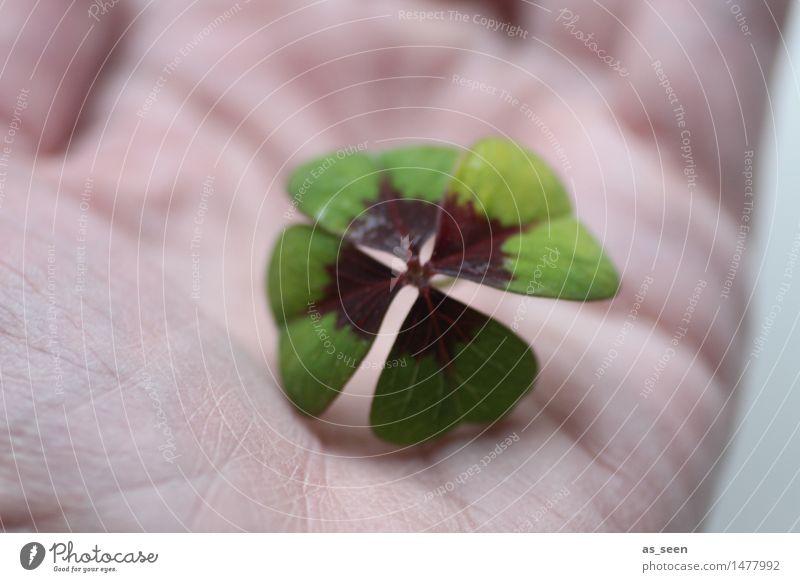 Glück schenken Lifestyle Design Freude Gesundheit Wellness Leben harmonisch Geburtstag Natur Pflanze Blatt Kleeblatt Glücksklee vierblättrig Zeichen festhalten