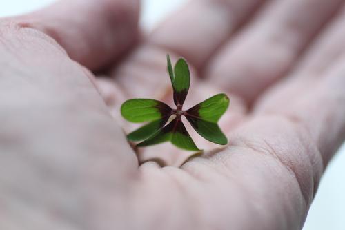 Glücksmoment Lifestyle Wellness harmonisch Meditation Muttertag Natur Grünpflanze Kleeblatt Zeichen berühren Freundlichkeit natürlich positiv rund grün Gefühle