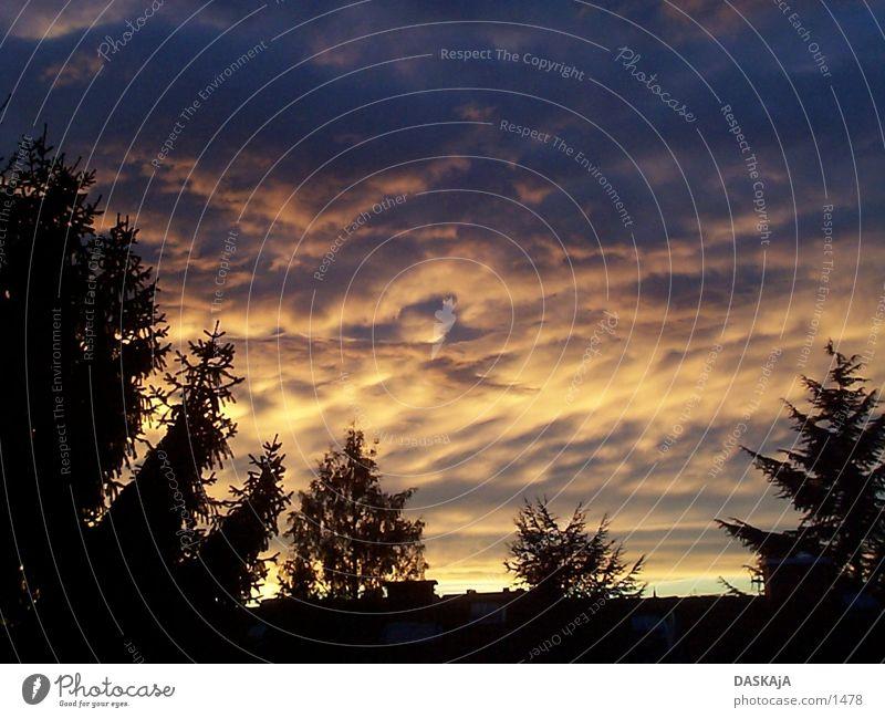 Herbstsonnenuntergang 1 Tanne Sonne gießen Deutschland Sonnenuntergang