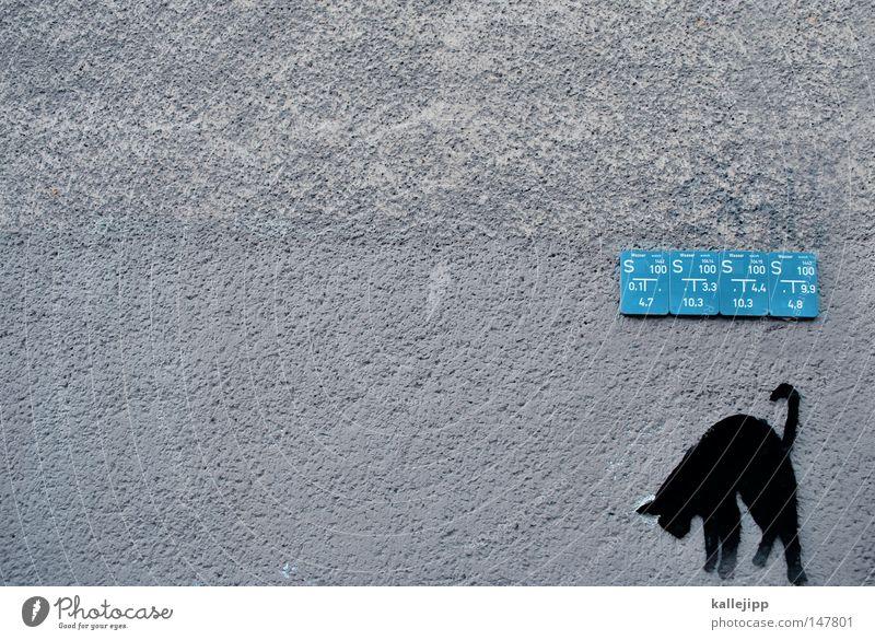 jogi löw Katze Tier schwarz Wand Wärme Auge Graffiti Bewegung Stil klein Schilder & Markierungen Mund süß Lebewesen nah Fell