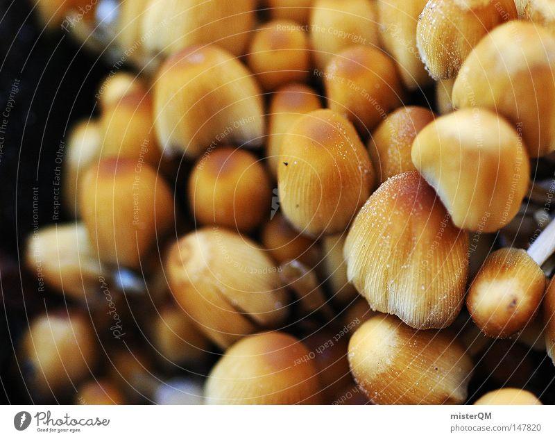 Getarnte Trüffel - Herbsttag Natur Ernährung Lebensmittel klein braun Hintergrundbild mehrere wandern nass Wachstum Ausflug Perspektive viele nah Gastronomie