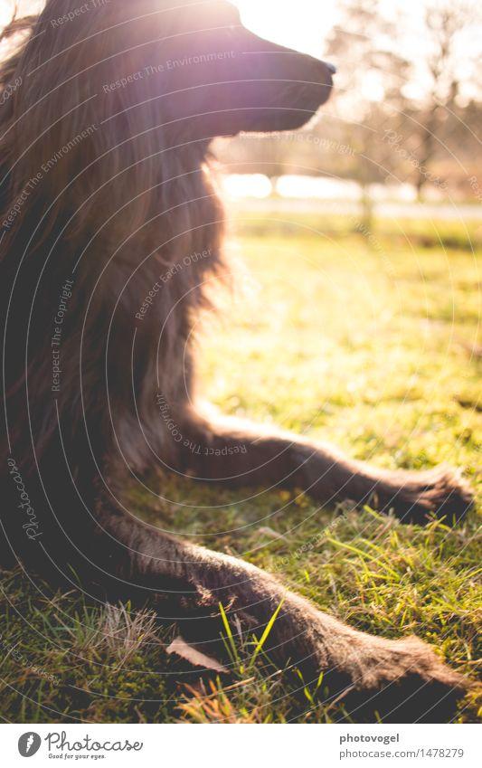 Lichtzauber Hund Natur grün ruhig Tier schwarz gelb Wiese Gras Glück Garten träumen Zufriedenheit genießen Schönes Wetter Gelassenheit