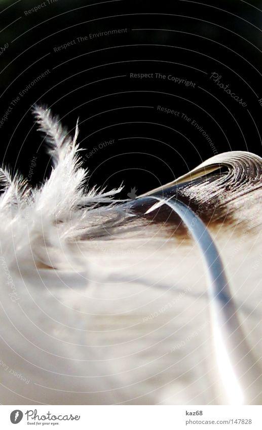 leicht wie eine weiß Luft Vogel Wind fliegen Luftverkehr Schriftzeichen weich Frieden Feder Dekoration & Verzierung schreiben Schriftstück Gewicht sanft