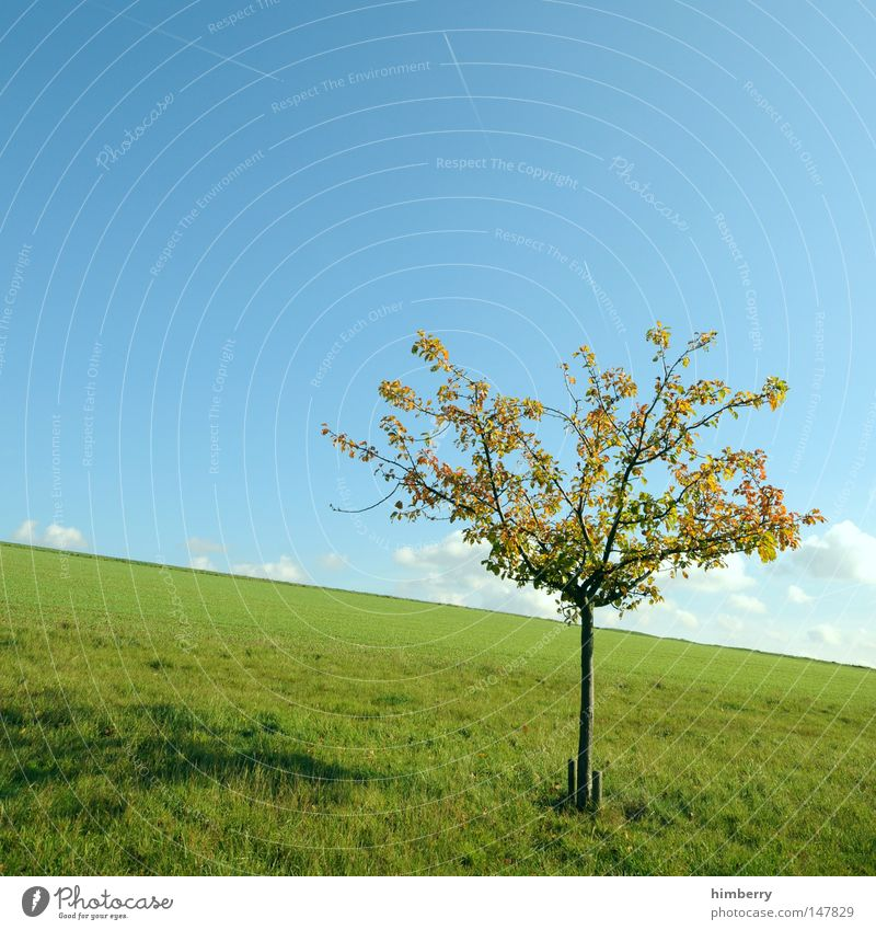 treehill Himmel Natur Baum Einsamkeit Wolken Landschaft Wiese Herbst Gras Deutschland Hintergrundbild Wetter Frucht Feld groß Hoffnung