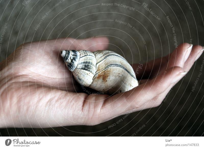 feeling Hand Finger Natur Schnecke Muschel berühren festhalten tragen authentisch klein Wahrheit Zukunftsangst Frieden Kontakt nachhaltig Schwäche Umweltschutz