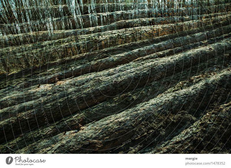 Baumstämme Natur Blatt Wald Umwelt Tod Holz braun Arbeit & Erwerbstätigkeit Energiewirtschaft Buch Landwirtschaft Tanne Doppelbelichtung Durchblick