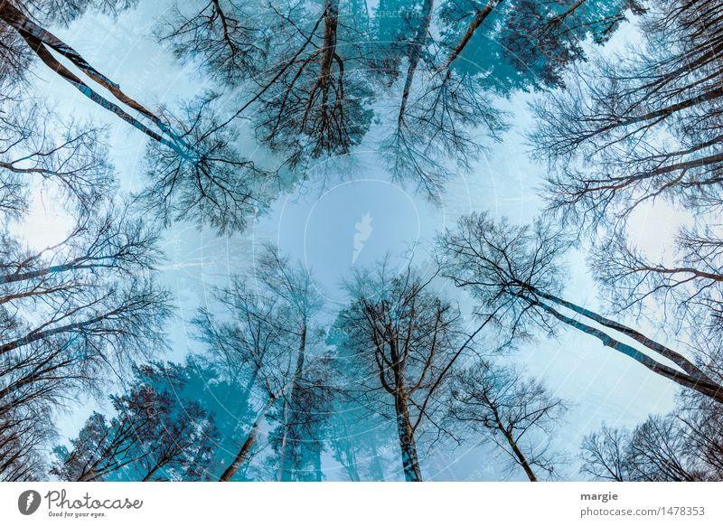 Himmlische Bäume Himmel Natur Pflanze blau Baum Erholung Blatt ruhig Tier Winter Wald kalt Umwelt Herbst Tod Holz