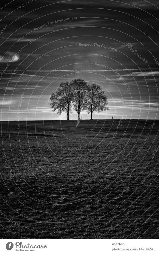 verlassenes Trio Mensch 1 Landschaft Pflanze Himmel Wolken Horizont Wetter Schönes Wetter Baum Gras Wiese Hügel laufen ästhetisch schwarz weiß Spaziergang 3