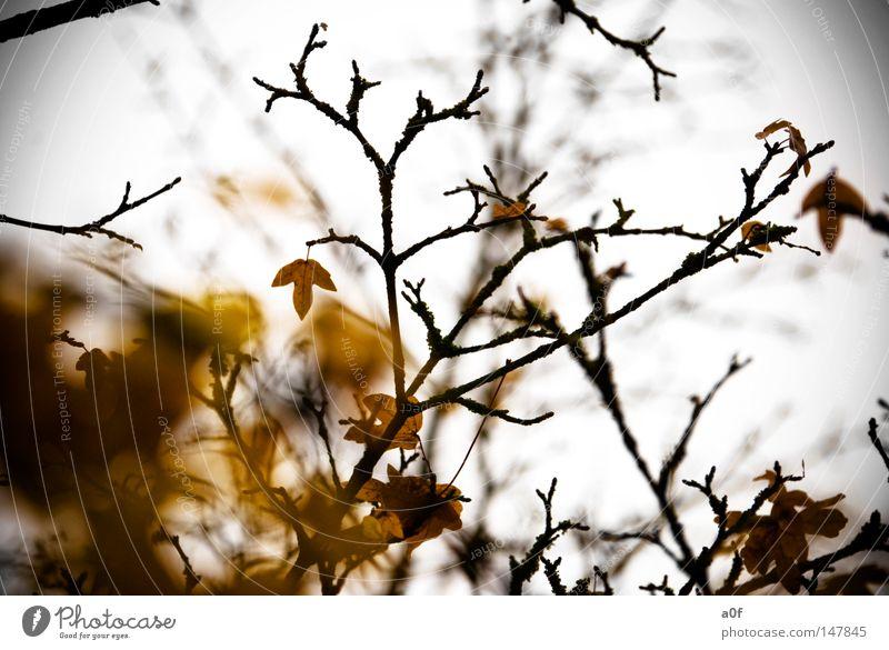 the end Herbst Ende Blatt Baum gelb Ast Vergangenheit Vergänglichkeit vergangen