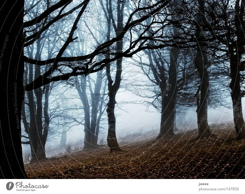 Unheimlich nebelig Angst Ast Baum Baumstamm Blatt Boden dunkel Einsamkeit Ferne gruselig Herbst Herbstfärbung Herbstgefühle herbstlich Herbstwetter kalt karg