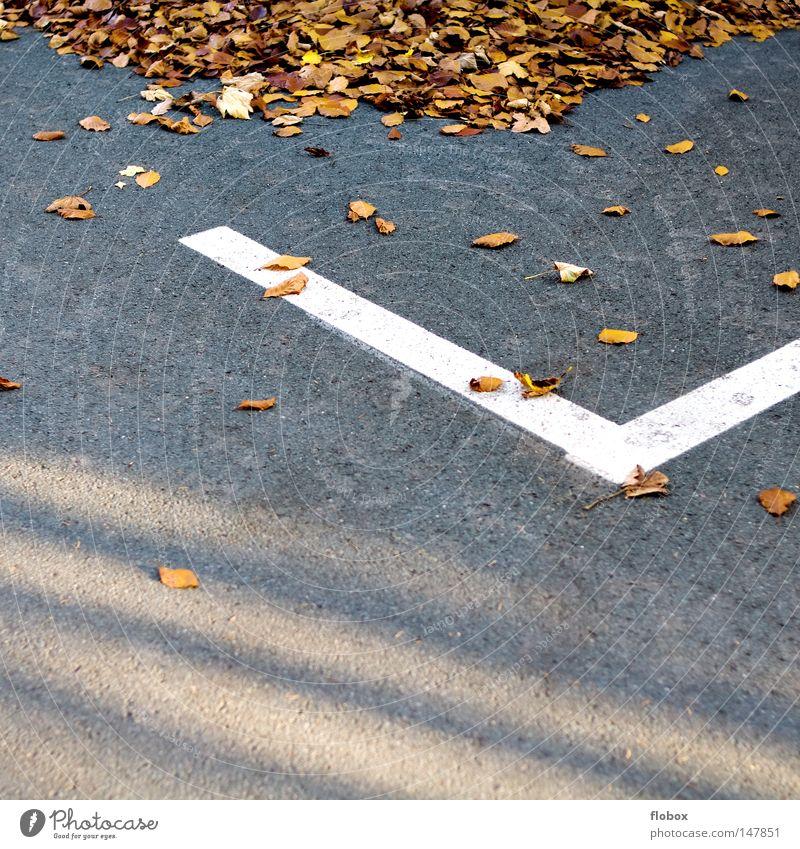 Eingeparkt Natur weiß Baum Farbe Blatt gelb Straße Wärme Herbst Mauer Linie Hintergrundbild Erde gold Schilder & Markierungen Spaziergang