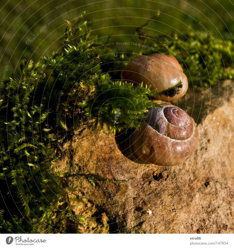 sonnen zu zweit Tier Wiese Stein Schnecke Schneckenhaus
