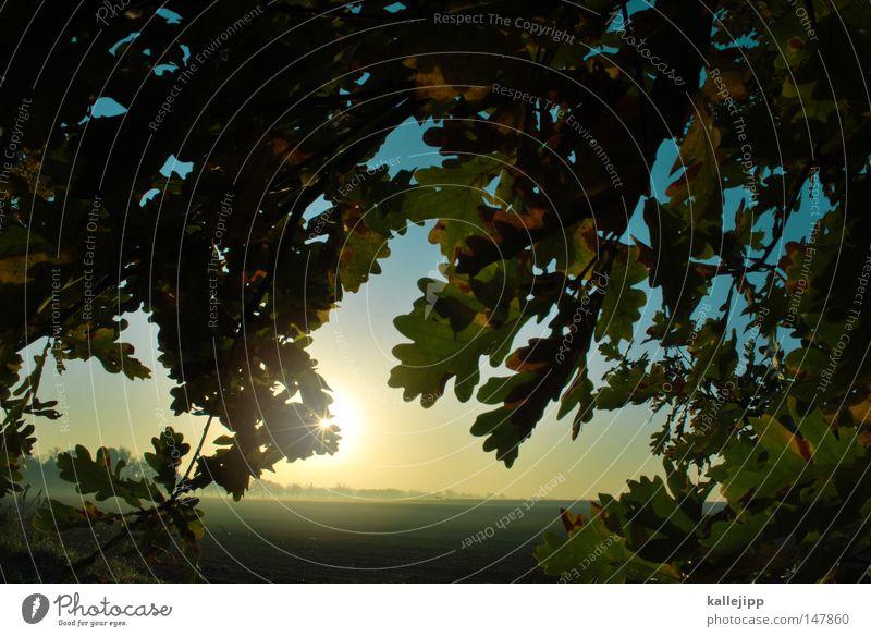 aische Natur Baum Sonne Pflanze rot Blatt Herbst Wiese Wege & Pfade Stimmung Feld Nebel Erde Stern (Symbol) Wachstum Landwirtschaft
