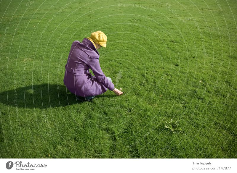 Pflück! Frau Natur grün Pflanze gelb Wiese Gras Garten Park Rasen Frieden violett Sportrasen Löwenzahn Mütze Mantel