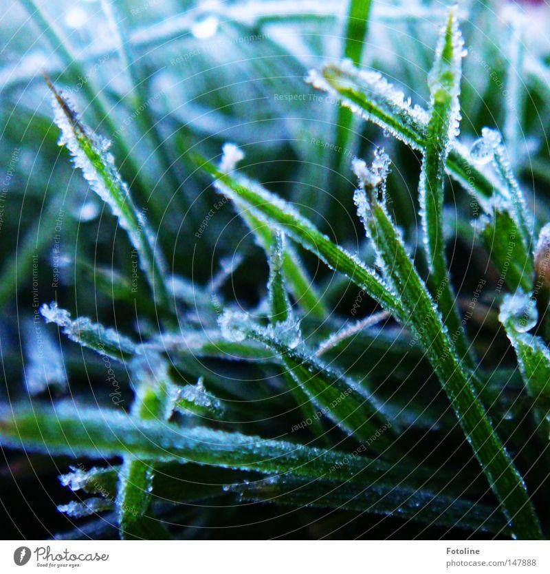 frostige Zeiten brechen an Eis Frost Raureif kalt Schnee Gras Rasen Sportrasen Winter Herbst dunkel gefroren grün weiß Erde Boden Pflanze Morgen Sonnenaufgang