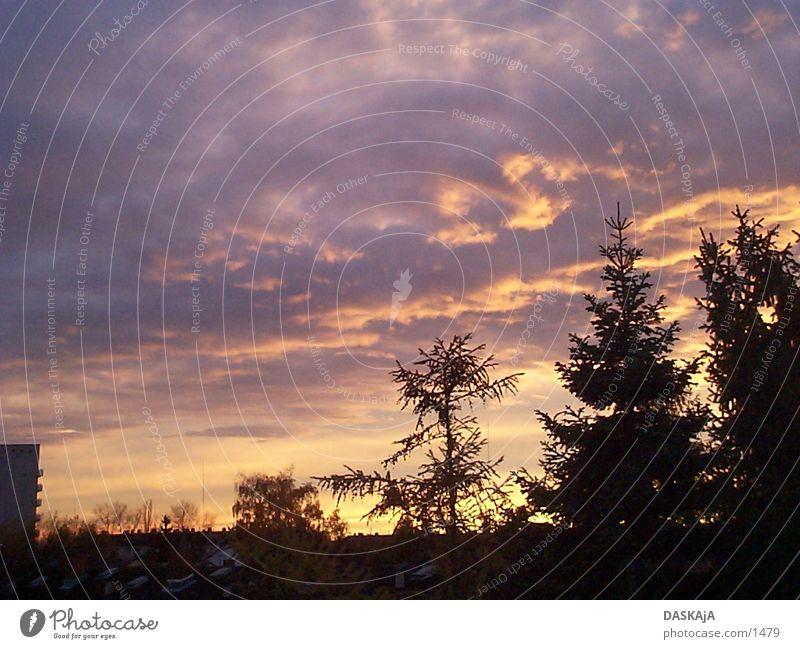 Herbstsonnenuntergang 2 Tanne Sonne gießen Deutschland Sonnenuntergang