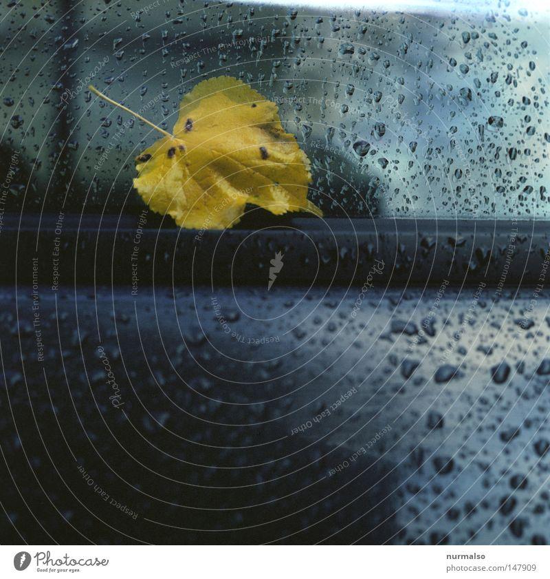 Schwermut in Dur alt Wasser Ferien & Urlaub & Reisen Baum Blatt Wolken kalt Herbst Bewegung Freiheit PKW Regen Wetter Glas glänzend