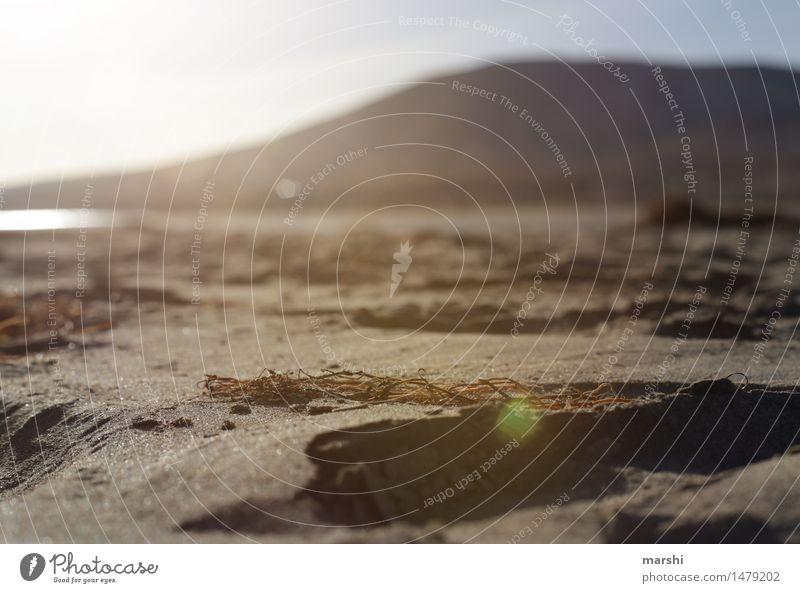 ein Tag am Strand Umwelt Natur Landschaft Sonnenaufgang Sonnenuntergang Sonnenlicht Sommer Schönes Wetter Küste Bucht Meer Insel Stimmung Algen Urlaubsfoto