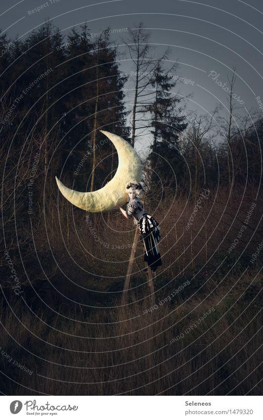 Moon Mensch Frau Himmel Natur Baum Ferne Wald Erwachsene Umwelt Herbst Wiese feminin Abenteuer festhalten Mond Märchen