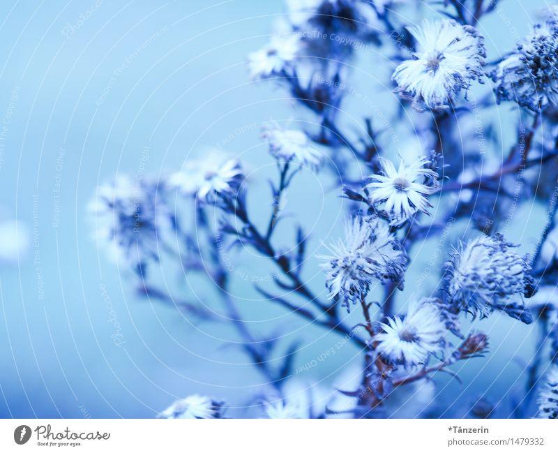 Winterblümchen Natur Pflanze blau schön weiß Blume Blüte natürlich Garten hell Park frisch ästhetisch