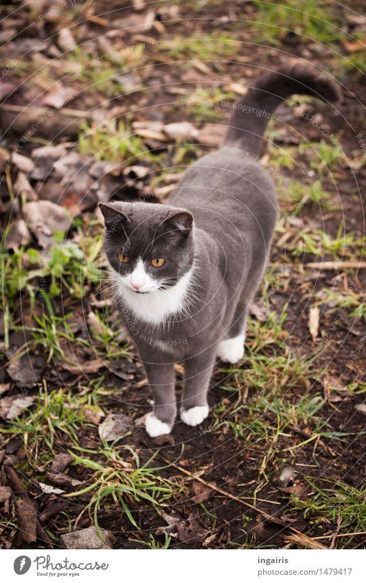 Ein Freundlicher Erde Gras Wiese Tier Haustier Katze Hauskatze 1 beobachten Blick stehen Freundlichkeit schön Neugier niedlich braun grau grün weiß