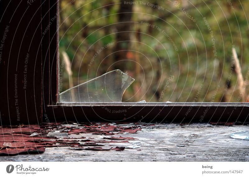 hinten rein Fenster Garten Wetter gefährlich bedrohlich Vergänglichkeit verfallen gebrochen Fensterscheibe Dieb Scheibe Kriminalität Sicherheit Diebstahl Scherbe Einbruch