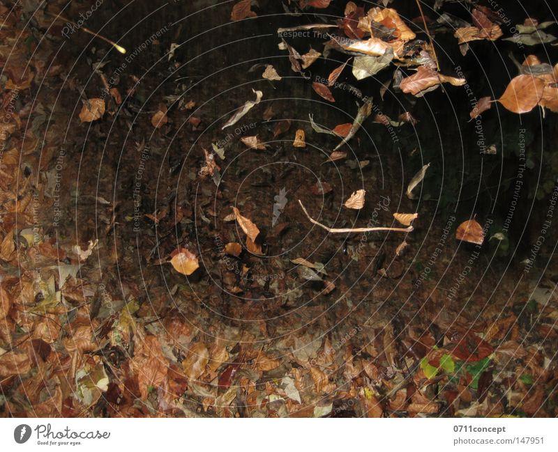 Blätterwald Blatt Herbst Winter Wind Turbulenz Leichtigkeit Erholung wandern Luft Bewegung Freiheit Natur Spaziergang Bodenbelag Erde