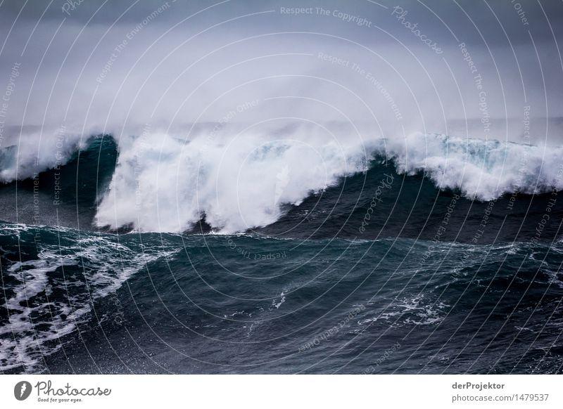 Zwei Monsterwellen auf Madeira Natur Ferien & Urlaub & Reisen Pflanze blau Wasser Meer Landschaft Tier Ferne Winter Umwelt Küste Freiheit Tourismus Wellen Kraft
