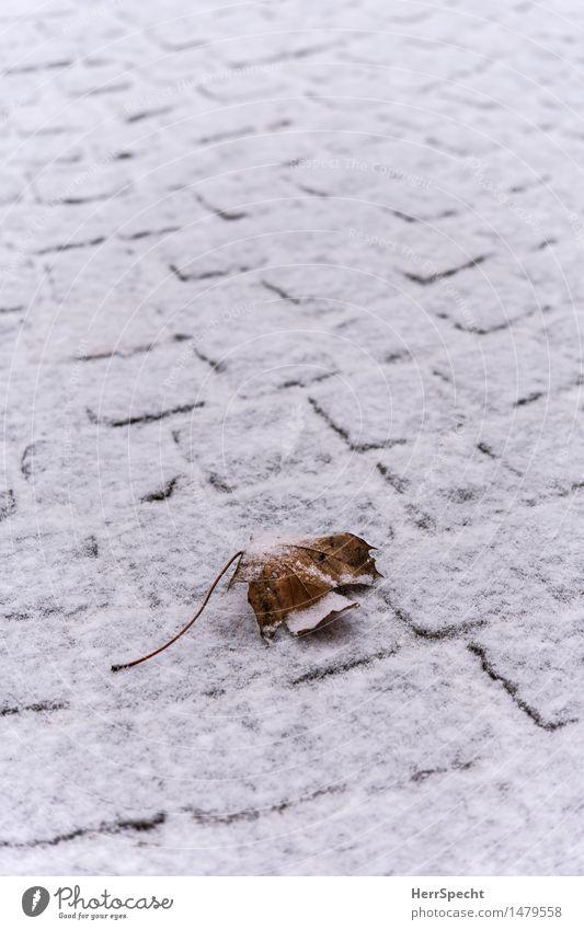 Winteranfang Schnee Blatt alt braun weiß Tod Verfall Vergänglichkeit Schneedecke Pflastersteine Ahornblatt Herbstlaub Einsamkeit Pulverschnee sanft weich
