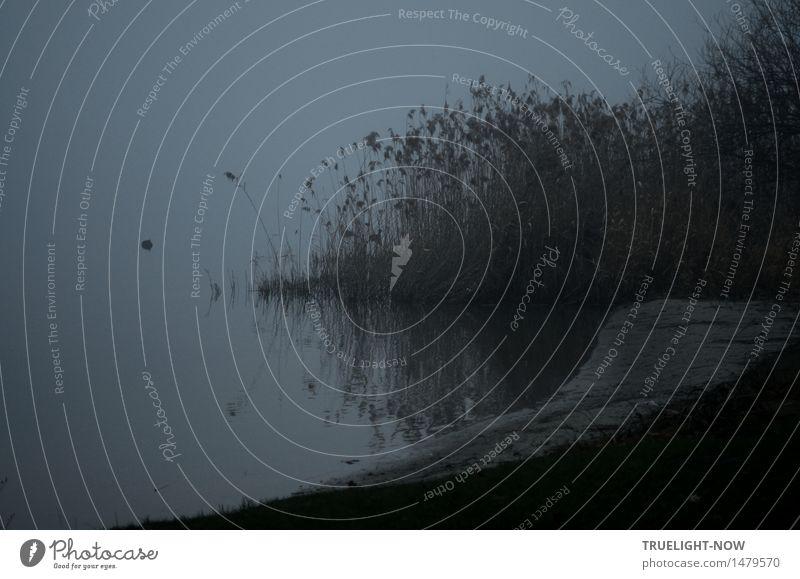 Die graue Lagune. Natur Landschaft Pflanze Urelemente Erde Sand Wasser Winter Wetter schlechtes Wetter Nebel Gras Schilf Park Wiese Seeufer Tiefer See/Havel