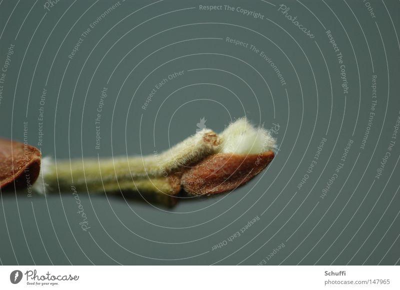 Neue Knospe, neue Hoffnung grün Pflanze Frühling Gesundheit Wachstum Blütenknospen Blattknospe Brennpunkt Reifezeit