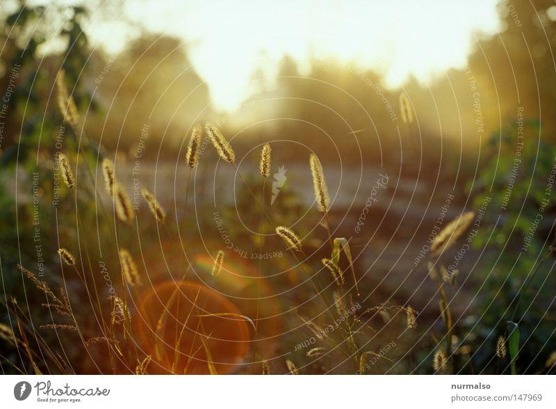 Morgen! Sonne Herbst Gartenbau schön Licht Beleuchtung Halm Pflanze glänzend Nebel Wassertropfen Tau Osten Blende Fleck Reflexion & Spiegelung Dia analog