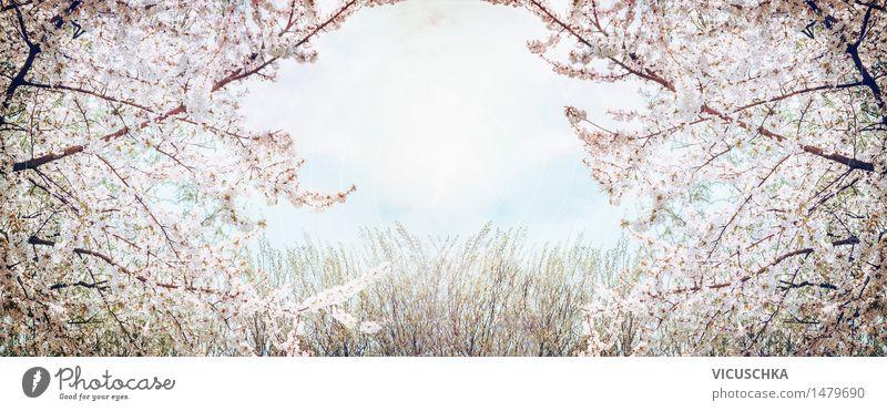 Blühende Obstbäume über Himmel und Frühling Natur Pflanze Sommer Baum Blatt Blüte Stil Hintergrundbild Lifestyle Garten Design Park Schönes Wetter