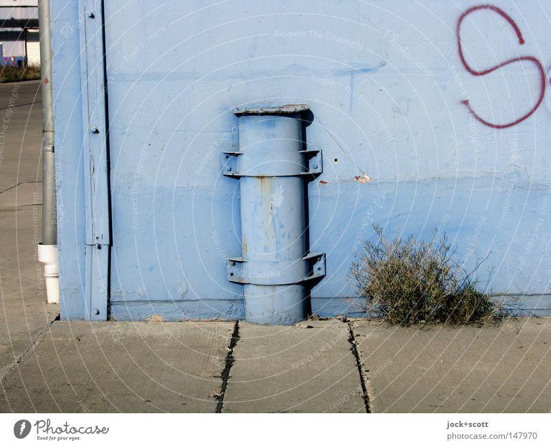 blaue Elise Pflanze Gras Straße Graffiti Farbe Vergänglichkeit Poller Farben und Lacke Spalte Ecke Eisenrohr Röhren einfarbig Leiste Schelle deutlich robust