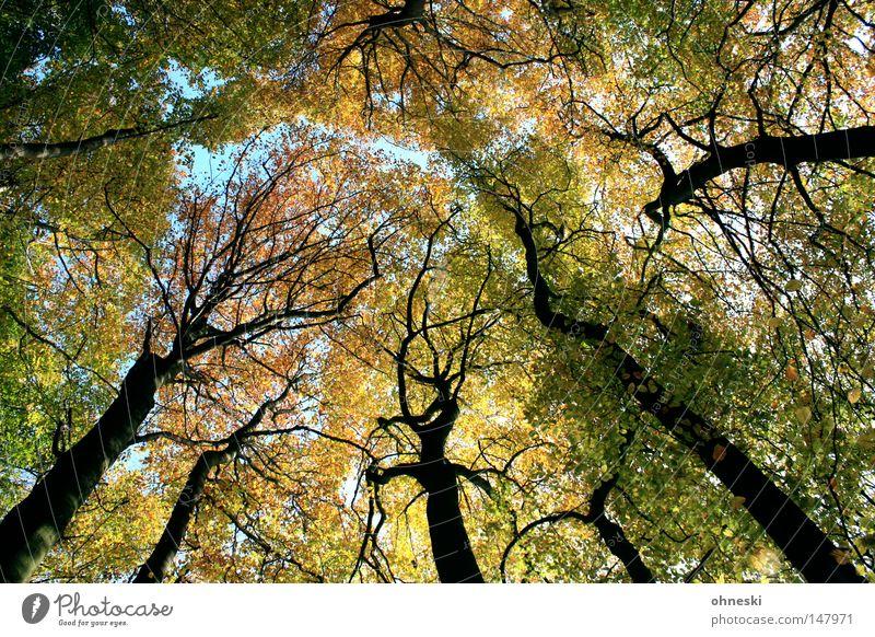Wald Natur Baum grün blau Blatt gelb Herbst Berge u. Gebirge braun frisch Spaziergang Dach Ast Baumstamm