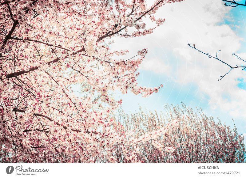Blühenden Kirschblüte-Baum am Himmel Hintergrund Stil Design Sommer Garten Natur Pflanze Sonnenlicht Frühling Schönes Wetter Blatt Blüte Park rosa Asien