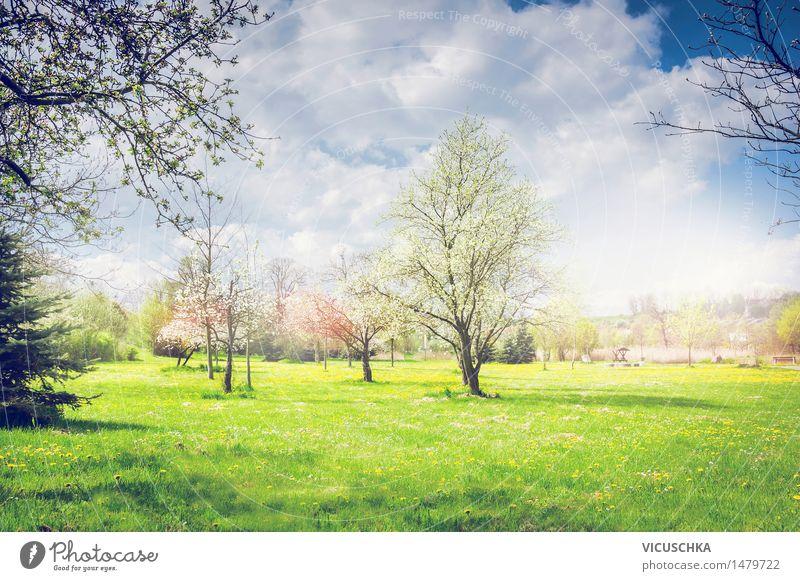 Frühling. Park oder Garten mit blühenden Obstbäumen Natur Pflanze Sommer Baum Blume Landschaft Blatt Blüte Gras Hintergrundbild Lifestyle Design Sträucher