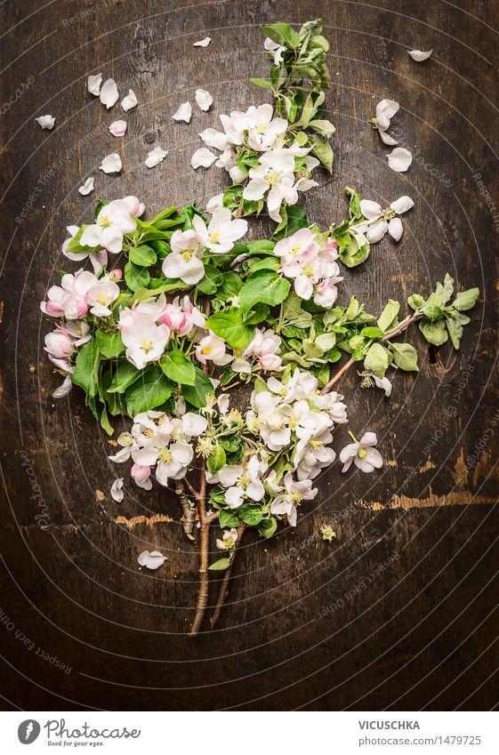 Blumenstrauß von blühenden Obstbäumen Natur Pflanze Baum Blatt Blüte Frühling Stil Garten Design Dekoration & Verzierung Blühend retro Duft Frühlingsgefühle