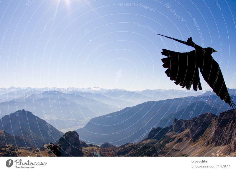 the sky is the limit Himmel Ferien & Urlaub & Reisen schön Sonne Berge u. Gebirge Herbst fliegen See Vogel Felsen Freizeit & Hobby frei Feder hoch groß