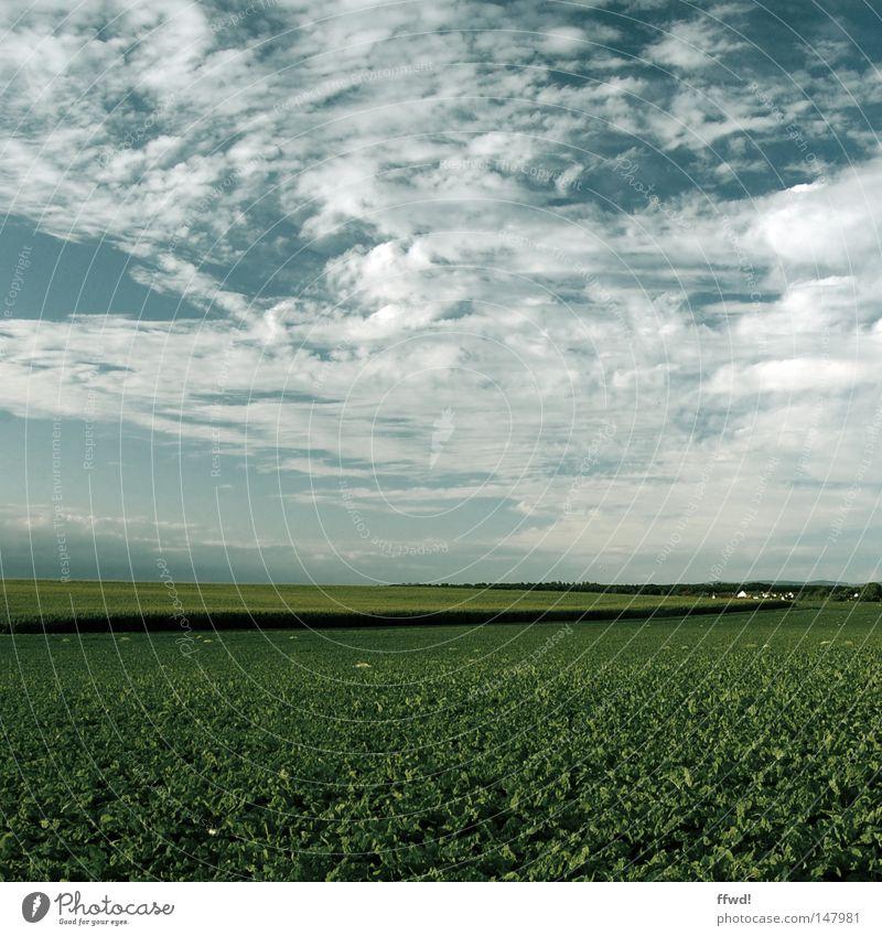 Heimatliebe Feld grün Ackerbau Aussaat Landwirtschaft Ernte Reifezeit Aussicht Ferne Dorf Wohnsiedlung Haus Gebäude Freiheit Natur Himmel Wolken Horizont
